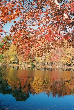 Fall, water reflection