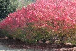 Fall Pic Laurel Grove 1