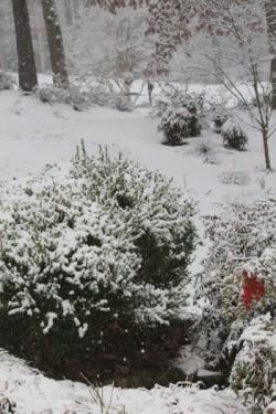 2015 snow yard 1