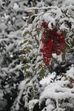 2015 snow yard 3